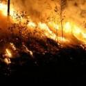 Wildfires in Arizona